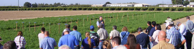 Alfalfa And Small Grains Field Day